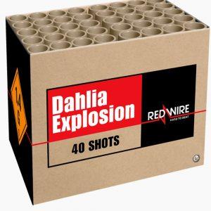 04394 Dahlia Explosion